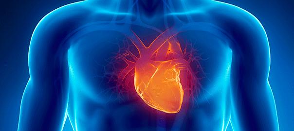 corazón células madre