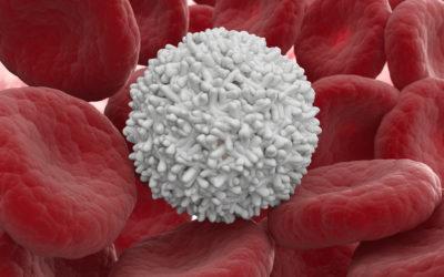 Evalúan el trasplante de células madre mesenquimales en pacientes con lesión de médula espinal